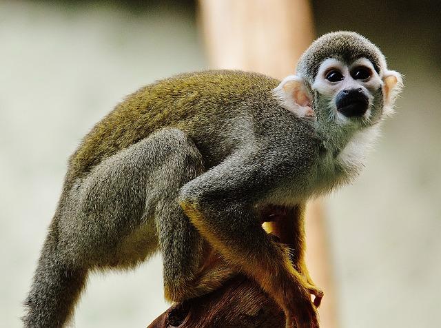 Het aapje op je schouder!